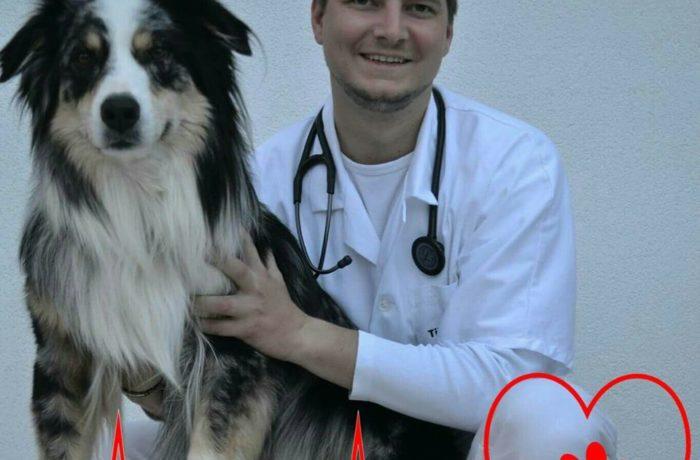 Kaj storiti, če se psu zasuče želodec?